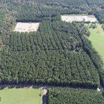 Acadia Parish Timberland property for sale