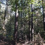 Timberland for sale in Acadia Parish