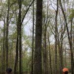 Bienville Parish Recreational land for sale