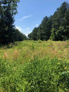 Smith Lane Tract, Caddo Parish, 40 Acres +/-