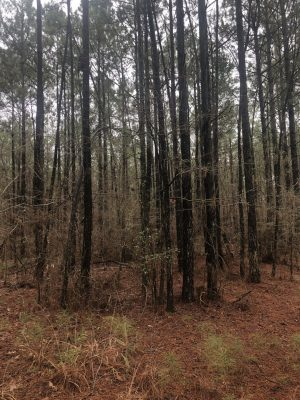 McCullin Road Tract, Lincoln Parish, 35 Acres +/- LALINCTB35