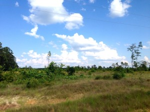 Development property for sale in Grant Parish