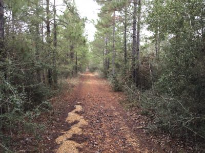 Recreational land for sale in Beauregard Parish