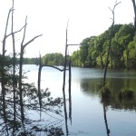 Little River County Timberland property for sale