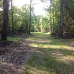 Timberland for sale in Little River County
