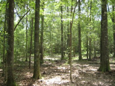 Investment land for sale in Winn Parish