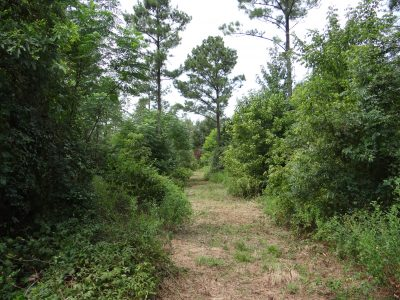 Bossier Parish Timberland for sale