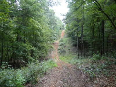 Webster Parish Timberland property for sale