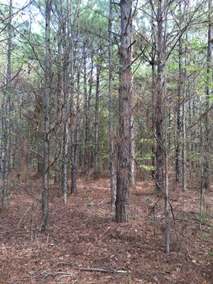 Agricultural property for sale in West Carroll Parish