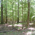West Feliciana Parish Timberland property for sale