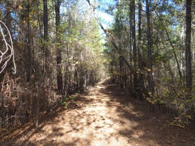 Timberland property for sale in Claiborne Parish
