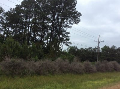 Residential property for sale in Winn Parish