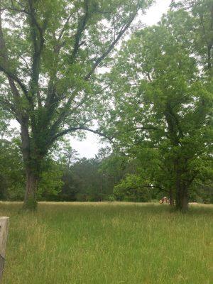 Allen Parish Timberland property for sale
