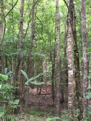 DeSoto Parish Agricultural property for sale