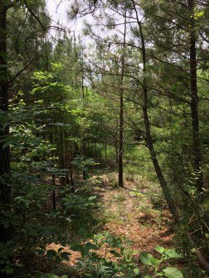 Bossier Parish Development land for sale