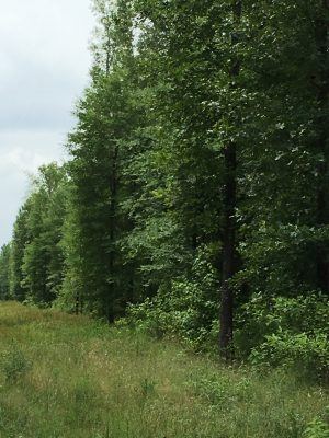 Timberland property for sale in Bossier Parish