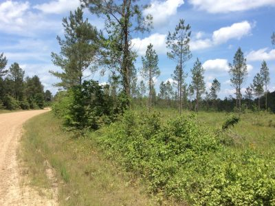 La Salle Parish Recreational property for sale