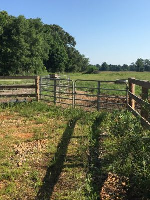 Lafayette County Agricultural land for sale