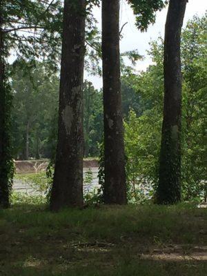 Beauregard Parish Development property for sale