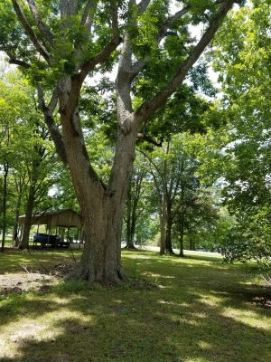 Catahoula Parish Investment property for sale