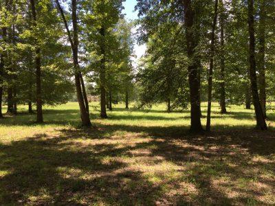Development property for sale in Union Parish