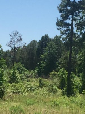 DeSoto Parish Recreational property for sale