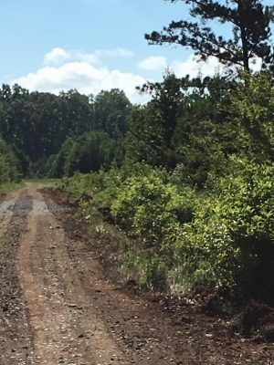 Investment land for sale in Bossier Parish