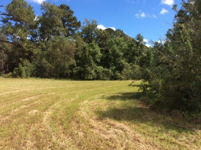 Rapides Parish Development land for sale