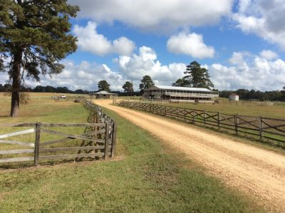 Pasture land for sale in Wilkinson County