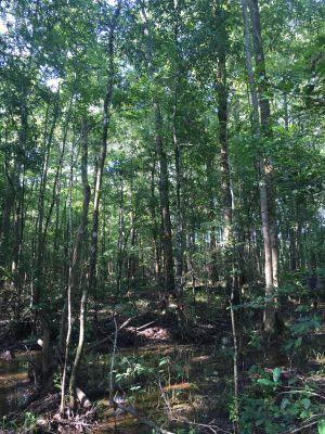 Recreational property for sale in Sabine Parish