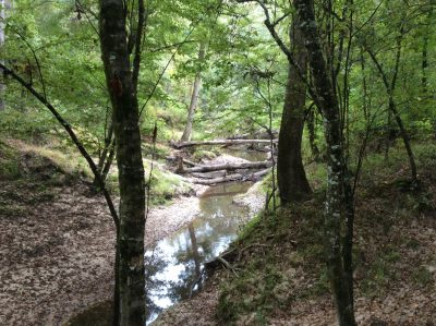 Timberland property for sale in Catahoula Parish