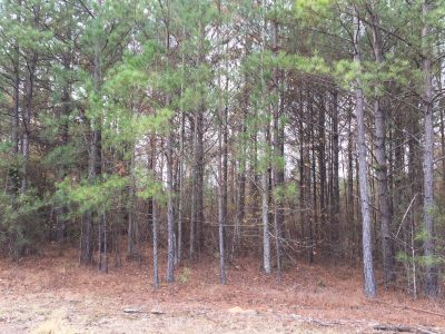 Investment property for sale in Jackson Parish
