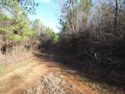 Claiborne Parish Timberland for sale