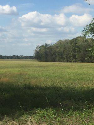 Investment land for sale in Calcasieu Parish