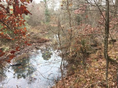 Columbia County Timberland for sale