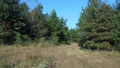 Timberland for sale in Lafayette County