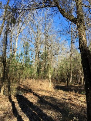 Timberland property for sale in Lafayette County