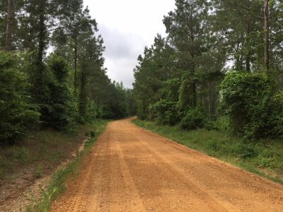 Timberland for sale in Union Parish