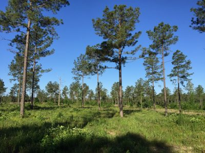 Jackson Parish Residential property for sale