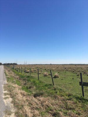 Calcasieu Parish Pasture land for sale