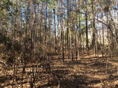 Grant Parish Investment land for sale