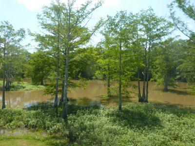 Residential property for sale in Avoyelles Parish