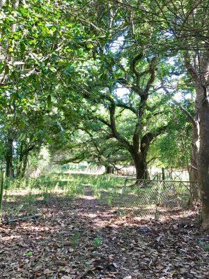 Pasture property for sale in Beauregard Parish