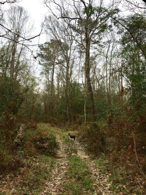 Beauregard Parish Investment land for sale