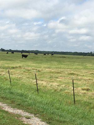 Evangeline Parish Ranchland for sale