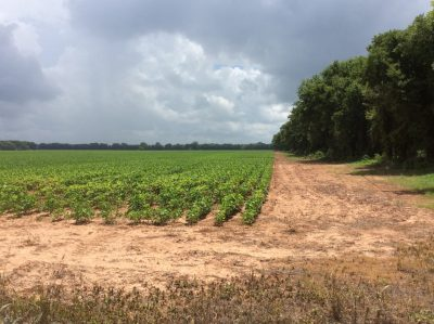 Agricultural property for sale in Grant Parish