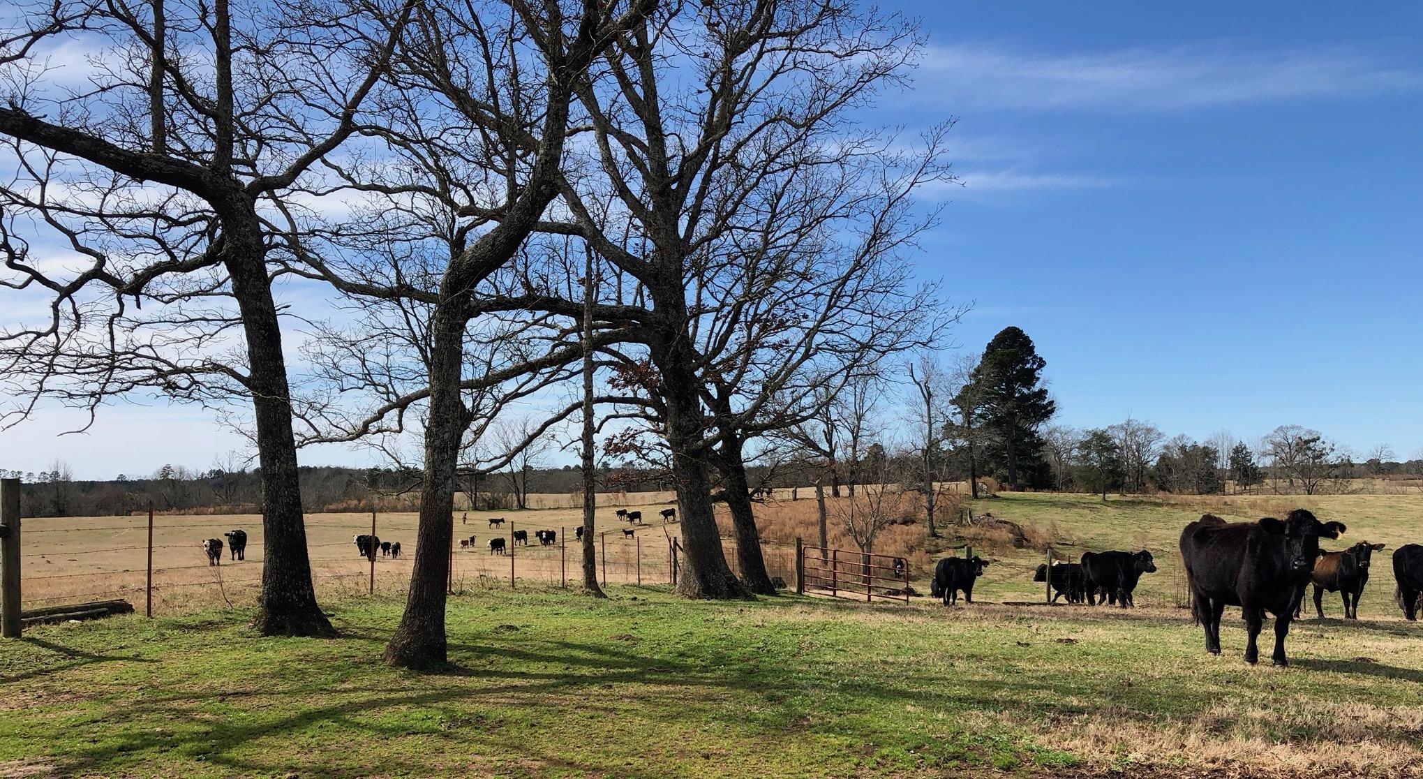 Shiloh Farms of Union Parish, 355 Acres +/-