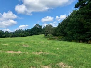 Gatson Road at Spearsville, Union Parish, 77 Acres +/-