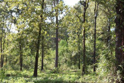 Development land for sale in Bossier Parish