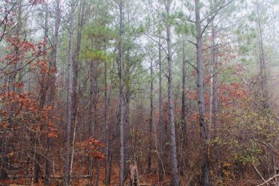 Timberland for sale in Bossier Parish